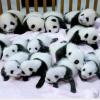 【上野動物園】歴代パンダの名前。ユウユウの秘話や