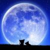 【月の土地】プレゼントしませんか?値段が安くてサプライズ感は抜群☆【誕生日】