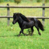 【愛知県警】「危機感ゼロ」Twitterに反響!捜索すべき馬のイラストが話題